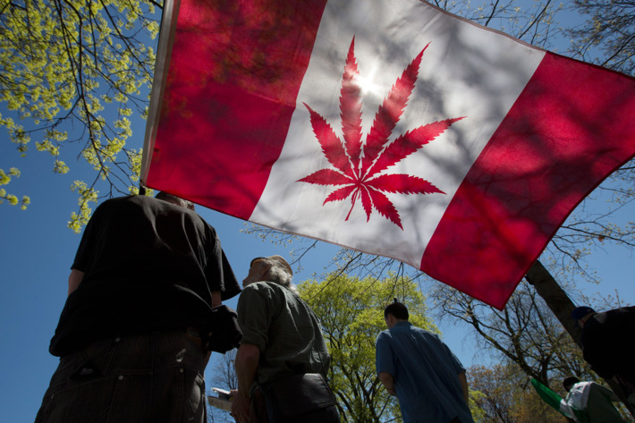 Legalna Marihuana najlepsza inwestycja giełdowa